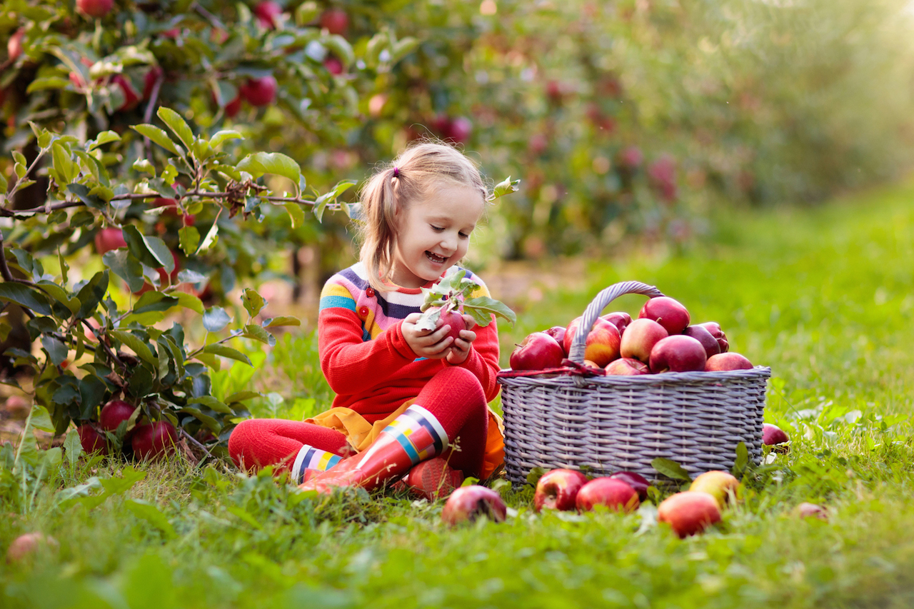 Little girl picking apple